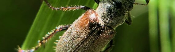 Insect Insights, a Bi-Weekly Buford Blog by Karen Richards
