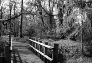 Footbridge over the Tom McCall Riverside trail
